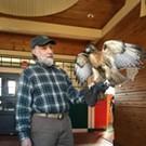 Hawks, Owls & Falcons