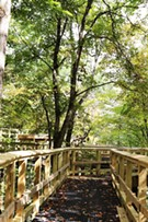 Forest Canopy Walk Opening Weekend