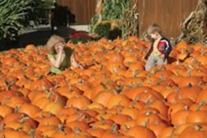pumpkin-photo-shoot-sm.jpg