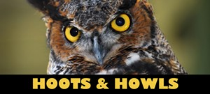 vins_hoots_howls14_web_banner.jpg