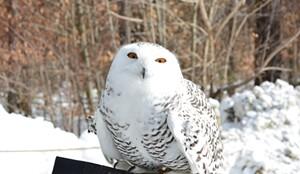 owl-festival-feb15-snowy.jpg
