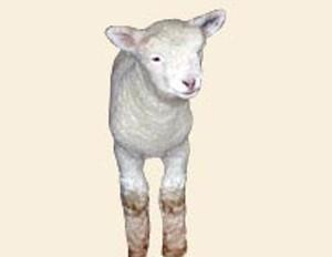 sidebar-lamb.jpg