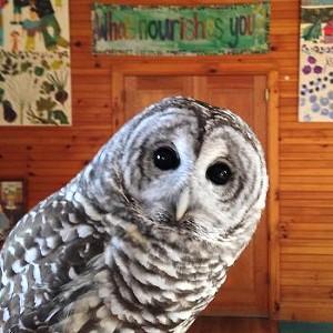 shelburne-farms-hawks-owls-falcons-2016.jpg