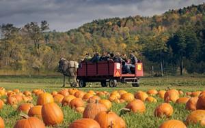 fullsize_pumpkins_with_wagon_by_ben_fleishman_2014.jpg