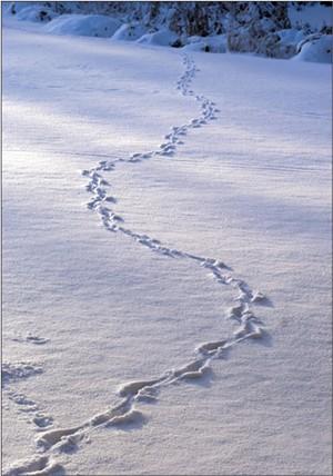 winter_tracks.jpg