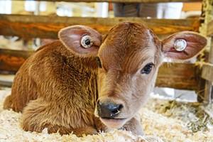 baby-animals-1024x683.jpg