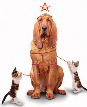 christmas_dog_cat.jpg