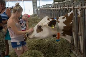 baby_meets_cow.jpg