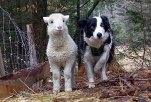 moonrise-farm-dog-and-sheep_orig.jpg