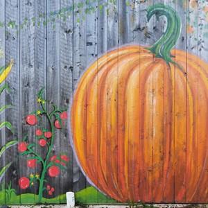 pumpkins_at_hartshorn_farm.jpeg