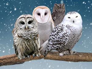 owl-festival-19-1080x810-1024x768.jpg