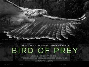 bird-of-prey-1080x810-300x225.jpg