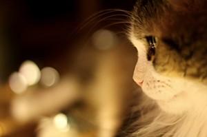 kitty_and_lights_1.jpg