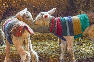 baby-sweater-sheep-1024x684.jpg