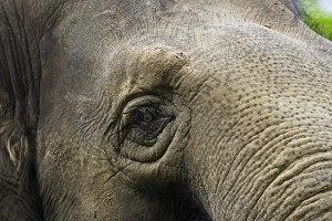 elephant_close-up.jpg