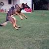 See Spot Run ... Again