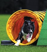 An agility course is among changes planned for Memphis Animal Services.