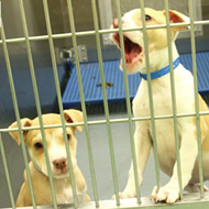 Animal Shelter Enforces No Photography Policy