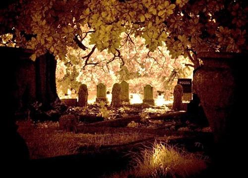 Woods_a-thumb6.jpg
