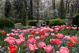6de391a5_dixon_gallery_and_gardens-_tulips.jpg