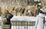 Asali and Ty at the Memphis Zoo - JUSTIN FOX BURKS