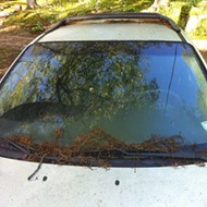 Catkins Killed My Car