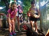 Children feed Joni Laney's chickens during Saturday's Tour De Coop bicycle tour.