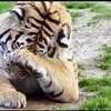 Cincinnati 97, Tigers 84