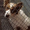 Council May Re-establish Animal Shelter Board