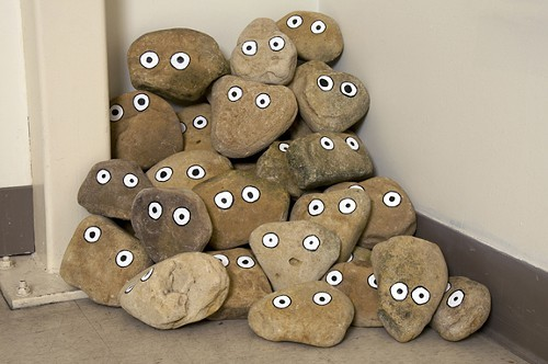 1280868909-tlw.pet.rocks.jpg