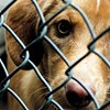 Disease Outbreak at Memphis Animal Services