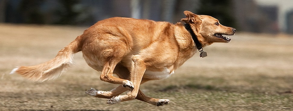 dog-running1.jpg
