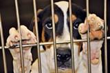 MEMPHIS PETS ALIVE - Dog #A257437 needs a good home.