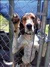 Elmore and other dogs need homes after Fayette County Animal Rescue suspends operation.