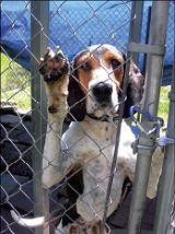 BY BIANCA PHILLIPS - Elmore and other dogs need homes after Fayette County Animal Rescue suspends operation.