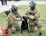 Firefighters treat a dog for smoke inhalation.