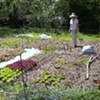 Getting Dirty at Downing Hollow's City Farm