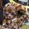 Harbor Town Dog Show