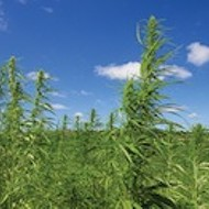 Hemp Farming Now Legal