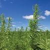 Hemp Farming Now Legal