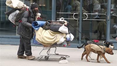 homeless_pets.jpg