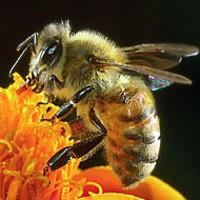 Honeybees at the Children's Museum