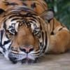 Houston 77, Tigers 68
