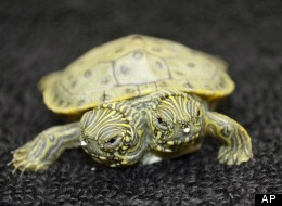 How Ooze REALLY affects baby turtles... #knowthetruth