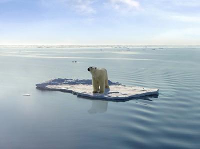 polar-bears-global-warming.jpg