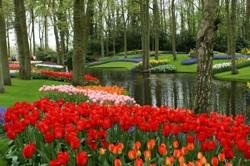 Merveilleux Garden Nature Spot