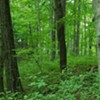 """International Paper Should """"Adopt"""" Shelby Forest"""