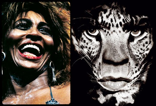 """Jagger/Leopard,"" by Albert Watson; Tina Turner by Henry Diltz"