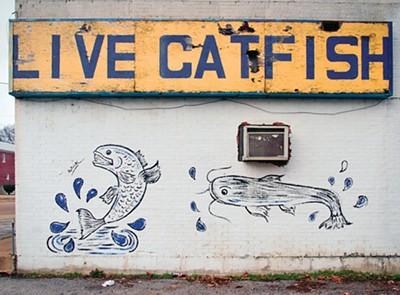 Live Catfish on Lamar