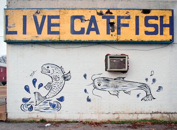 Live Catfish on Lamar